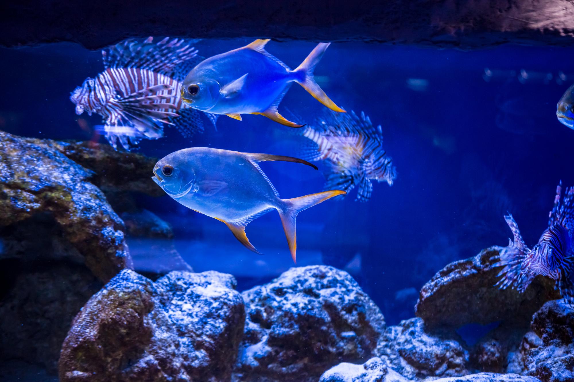 水族館 カメラ